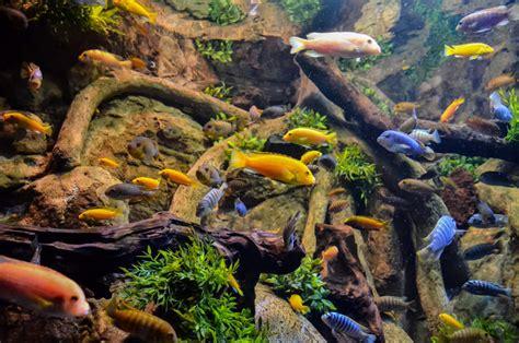 Termurah Fish All Ph Up controlling ammonia in a fish aquarium petcha