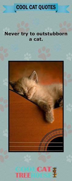 Mainan Kucing Cat It Senses Catit Desain Senses Scratch Pad 1000 images about cat cetera on cats cat and i cats
