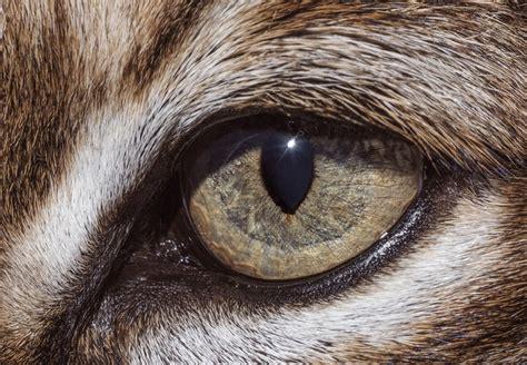 imagenes ojos de animales distintos ojos de animales un mismo dise 241 o