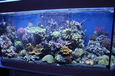 Lugol J Reef By Javareef2 le bac de poops69