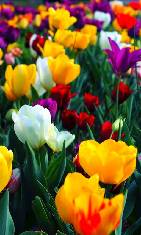 colorful live wallpaper free colorful flowers live wallpaper 2 apk for
