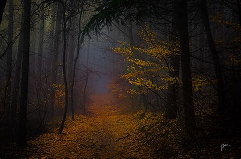 by janek sedlar photography pinterest les photos de for 234 ts d automne dans les carpates blanches