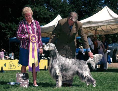 english setter dog show 8 7 2001 heater dog won the puget sound english