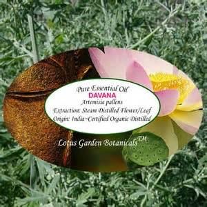 Davana Maxy davana organic essential