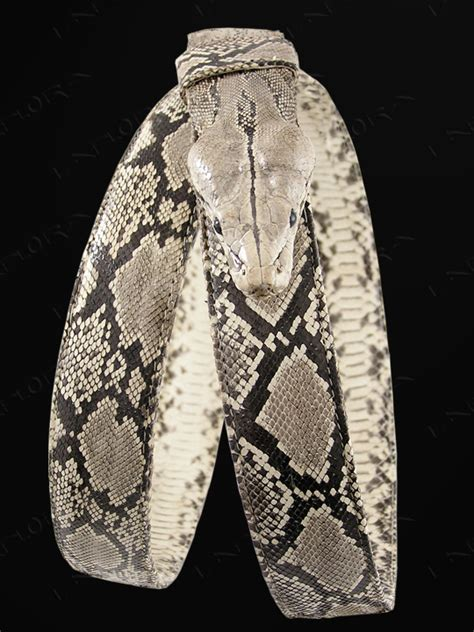 python heat l python taxidermy snakeskin belt ebay