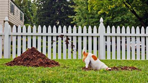 pets you can find in your backyard pet disasters is your dog digging in the yard catalyst