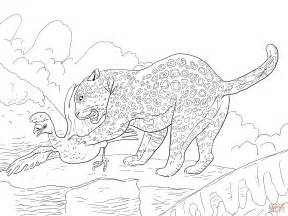 Jaguar Catches A Bird Coloring Page Free Printable Coloring Pages Jaguar