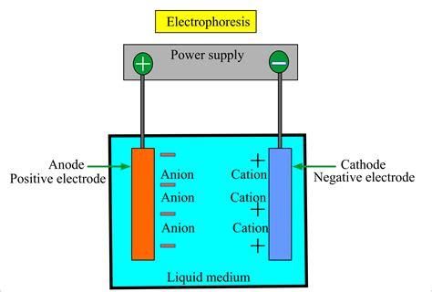 diagram of electrophoresis haemoglobin part 2 haemoglobin electrophoresis hb