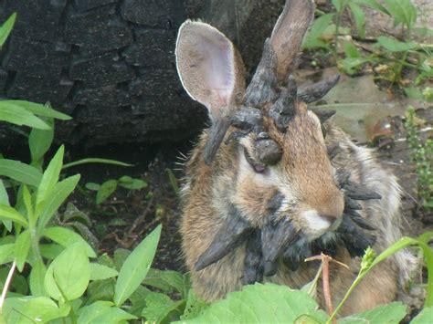 bunny in my backyard rabbit living in my friend s back yard album on imgur