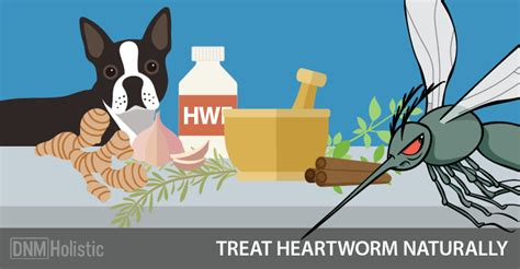 best heartworm medicine for dogs 5 heartworm treatment alternatives dogs naturally magazine