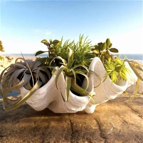 Large Clam Shell Decoration by Where To Buy Faux Clam Shells To Use As