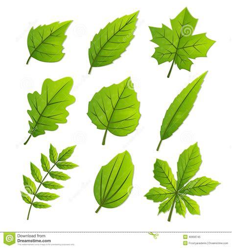 imagenes de hojas otoñales foglie della primavera illustrazione vettoriale