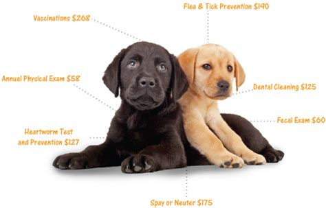 average cost of vet visit for your puppy s vet visit what to expect american kennel club