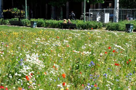 foto di prati in fiore i prati in fiore di oasi per gli insetti 1 di 1