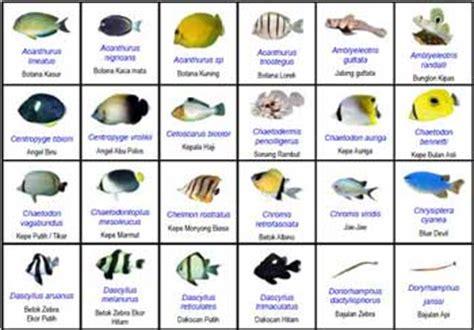 Daftar Harga Pakan Ikan Hias putra pratama bisnis ikan hias di indonesia