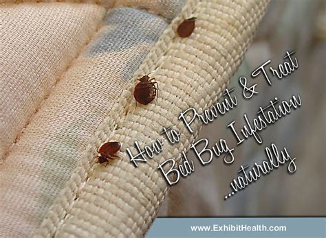 bed bug infestation treatment