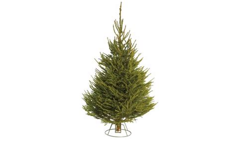 cheapest places to buy a christmas tree the cheapest places to buy a real tree this year mirror