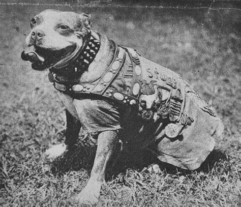 Sgt Stubby Badass Of The Week Image Gallery Sergeant Stubby