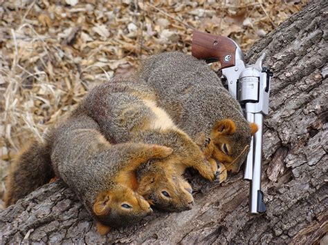 how to hunt squirrels in your backyard how to shoot a pistol discover everything you need for next level shooting