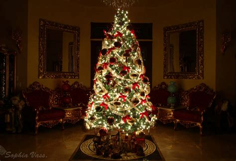 whats the best christmas tree 25 best unique and inspirational trees