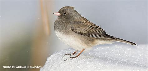 how do birds keep warm in cold winter weather 187 watching