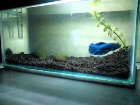 Pompa Aquarium Malang ikan cupang di dalam akuarium mini