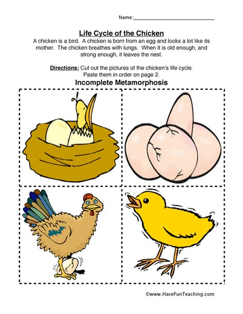 Cycle Of A Chicken Worksheet by Cycle Worksheets Teaching