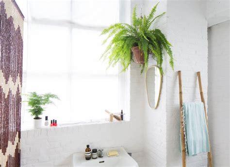 Kleine Kamerplanten Weinig Licht by 25 Beste Idee 235 N Badkamer Planten Op