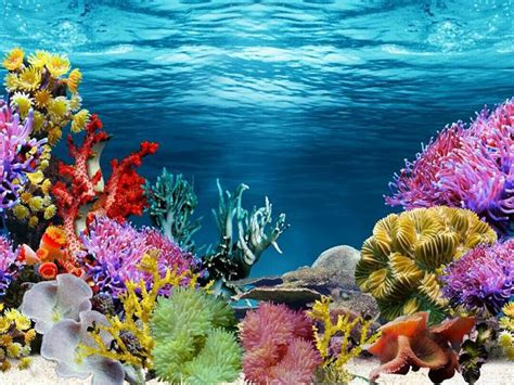 Background Aquarium