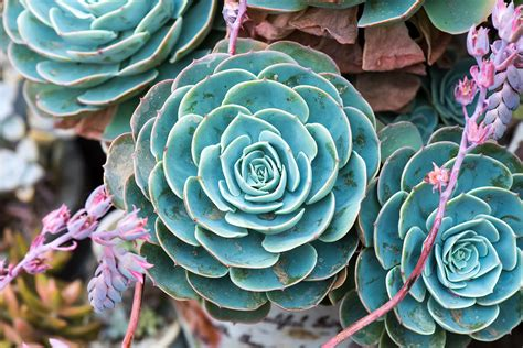 Succulent Planters For Sale by Succulents For Sale Where To Buy Succulent Plants