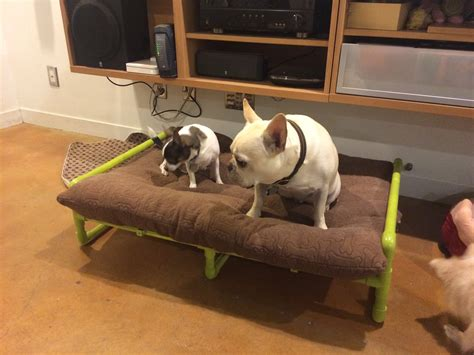 diy dog r for bed top 100 pvc pipes diy ideas youtube