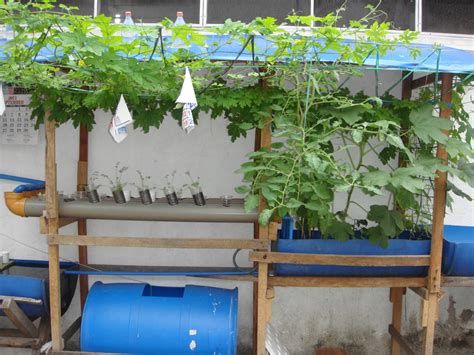 aquaponics backyard backyard aquaponics kit outdoor furniture design and ideas