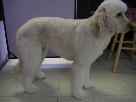 furminator for golden retriever furpawsonly ca pictures