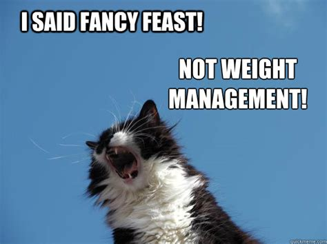 Fancy Feast Meme - i said fancy feast not weight management misc quickmeme