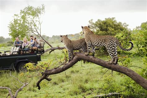 Big Picture Post Nation 5 by An Introduction To Africa S Big Five Safari Animals