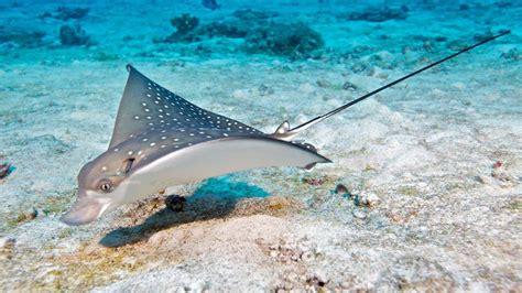 maldives dive scuba diving maldives diving hurawalhi maldives