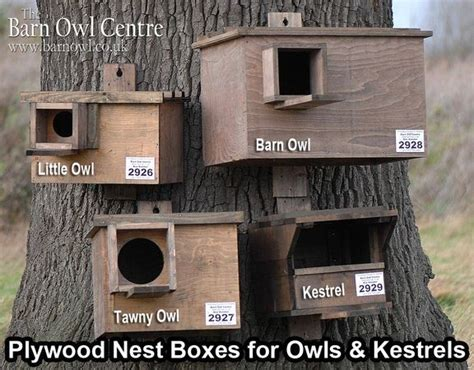 plans on how to build an owl nesting box the hungry owl project barn owl nest box plans woodworking database