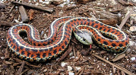 colorful snakes aspundir world s most colorful snakes