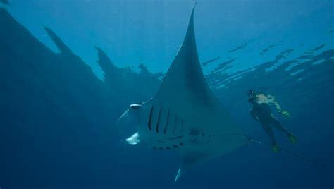 best snorkeling maldives scuba diving news maldives maldives diving