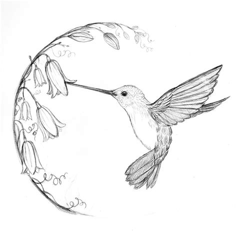 how to draw a hummingbird on a flower simple hummingbird sketch search tattoos hummi