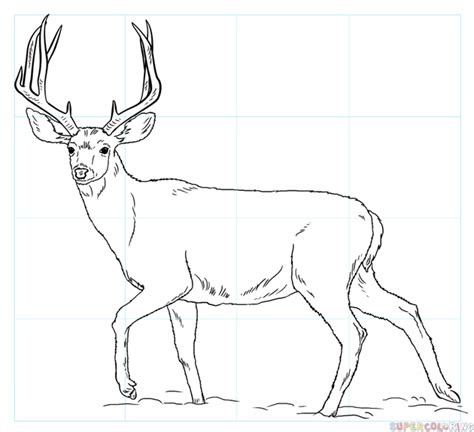 simple deer coloring pages how to draw a mule deer step by step drawing tutorials