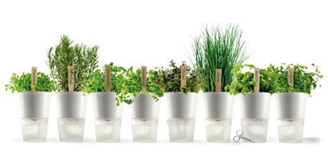 vasi per erbe aromatiche consigli per coltivare erbe aromatiche fresche sul balcone