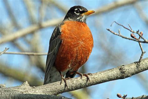 omg robins spotted jan springer erotic romance