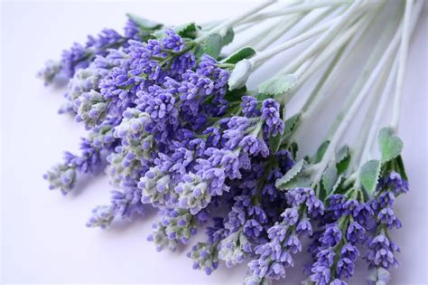 fresh lavender diy benefits of the lavender plant design sorbet