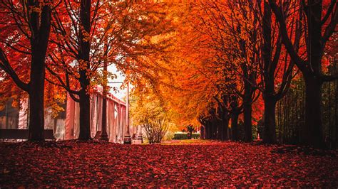 red leaves  trees park autumn hd wallpaper wallpaper