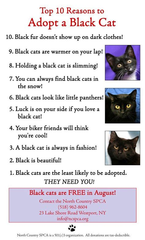Top 10 Reasons To Adopt A by Top 10 Reasons To Adopt A Black Cat Black Dogs Are