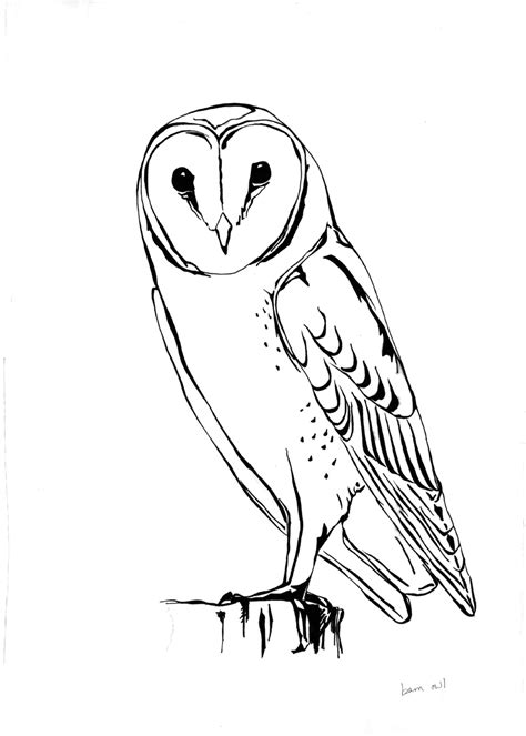 harry potter coloring pages owl touchy touchy kate lyons