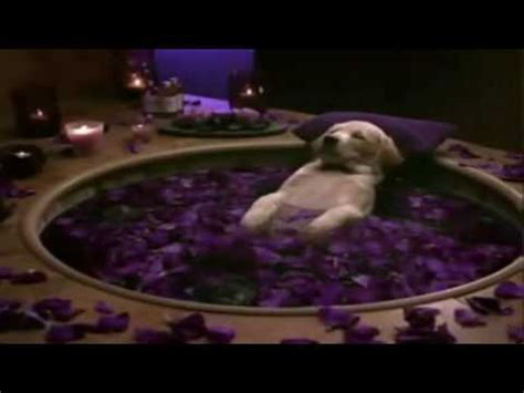cottonelle puppy cottonelle commercial puppy gets pered