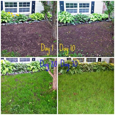 lessons learned from growing grass from seed via www diypassion com curb appeal pinterest