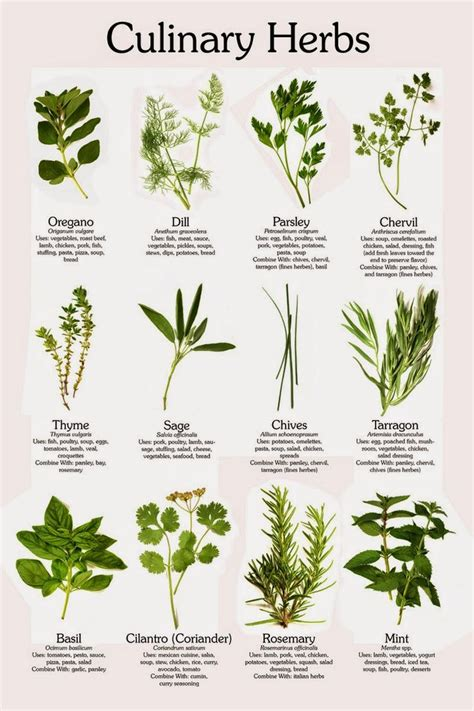 Identification Of Herbs Wildr | identifying wild eatable herbs herbalism pinterest herbs